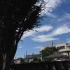 図書館ざんしょ古道の南面に広がる稲田と電池は切れきれ