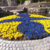 万博公園の花