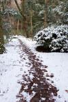 年一回積もる雪