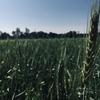 投資先としての農作物【DBA】