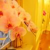 ダ・ヴィンチヴァーチャルミュージアム展と胡蝶蘭を堪能してきました