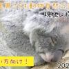 【レポ#20.5】埼玉県こども動物自然公園(2021/1/13)の見どころまとめ