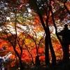【世界遺産】修学旅行の大定番!清水寺