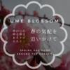 【おそとのええとこ】春の気配を追いかけて(2)【奈良市-月ヶ瀬梅渓】