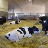 小中高の一斉休校と酪農業界の深い関係