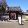 太山寺の垂れ桜2017.4.2