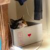 【愛猫日記】毎日アンヌさん#163