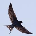 撮鳥見鳥 Toridori-Midori その弐