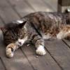 トップアスリートの睡眠ルール5~『40歳を過ぎて最高の結果を出せる「疲れない体」と「折れない心」のつくり方』葛西紀明