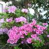 浜ちゃん日記    春の嵐とわが家の花木