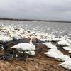 大沼バードハウス 野鳥がいっぱい!