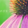 【週間カラダ予報5月17〜24日】東京も梅雨入り!(身体の変わり目後半の終盤へ)