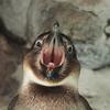 ペンギンの食事について