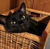 引っ越し祝いに猫とはいかがなものか。成猫を引き取る準備と慣れるまでの数日のこと