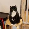 仁寺洞でのんびり猫カフェ@상자속고양이/サンジャソッコヤンイ