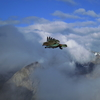 ニュージーランドの山で出会った鳥
