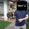 野生のアメジストニシキヘビを捕獲せよ