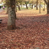 720  オレンジの絨毯