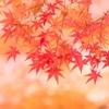 京都・紅葉の名所 東福寺でお墓を作れるそうです