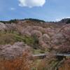 吉野山の千本桜をバイクで花見