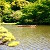 横浜・三渓園(2018年5月)3