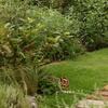 涼しい庭だけど、