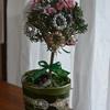 可愛いクリスマスツリー・・・トピアリーを使って