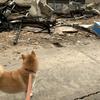 トピックス 犬の飼い主マナーアップが災害時の犬の避難対策やきれいな街の向上にキャンペーン