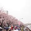 浅草の桜 2017