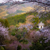 京都・西山 - 善峯寺 春景