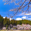 京都・京北 - 京北 東光寺の桜景色