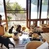保護猫×古民家 Cafe gattoを紹介するにゃ