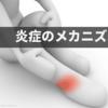 怪我で起こる組織の治癒・修復のメカニズム|炎症反応