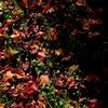 紅葉が終わり、冬が来た