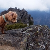 小さなマルプーが登山犬になった日|八ヶ岳の阿弥陀岳を中央稜から登った