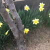 春の流行色を教えてもらいました@熊本県