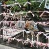 【博多】櫛田神社で御朱印を貰う。②裏参道をめぐる。