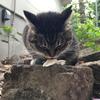 穏やかな猫の一日