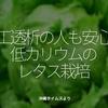 749食目「人工透析の人も安心!低カリウムのレタス栽培」沖縄タイムスより