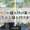 【家庭菜園】キュウリの植え付け第一弾!畝を立てて植え付けまでやってみた!