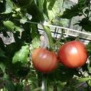 きまぐれ農家のブログ