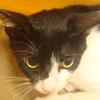 今日の黒猫モモ&白黒猫ナナの動画ー537