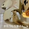 補修したボロボロ段ボールをかぶったカタツムリ猫さんが現れた!