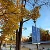 紅葉の時期にオススメな市庁にある石垣道(トルダムキル)