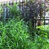 雑草が庭の保湿&保水に?ならば暑いので草取りしないことに(笑)