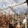 薪割り小屋改修 やっと脚立が立てられる Repairing wood splitting hut