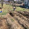 畝(うね)作り、菌まき