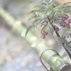 Leica M8 jpeg①