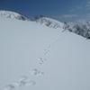 雪原を駆けていくウサギ。