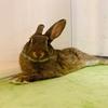 ウサギが目を開けて眠っているか眠っていないかの見極めは目のコレ??
